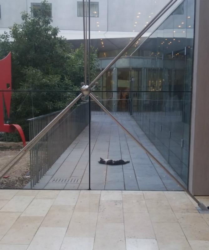 予選の会場Museum of the art、中庭に続く通路で、まるで落し物のタオルのように眠るネコさん。